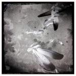 Massimo Giacci - Hipstafun - Floating Feathers